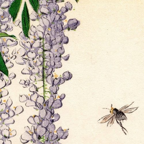 Shoda Koho - Wisteria & a Bee (featured)