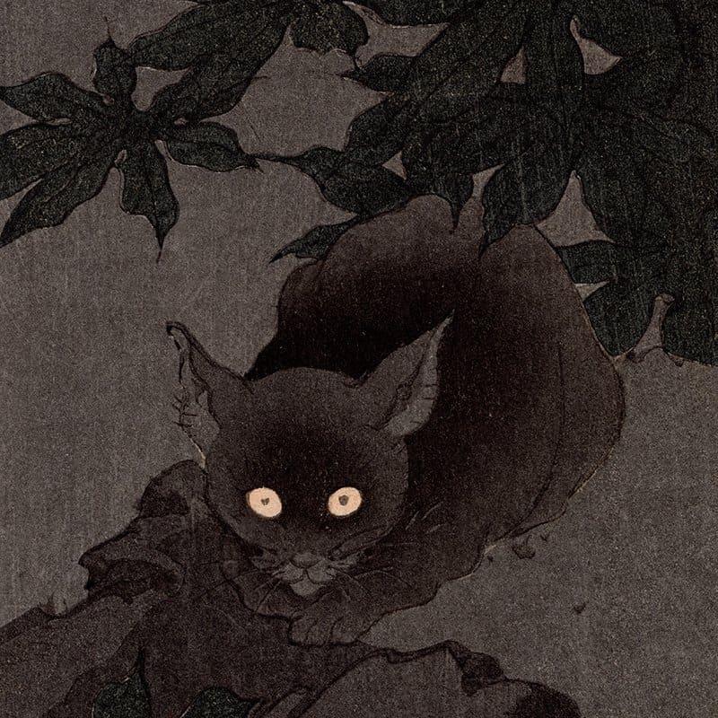 Shoda Koho - Black Cat at Night (featured)