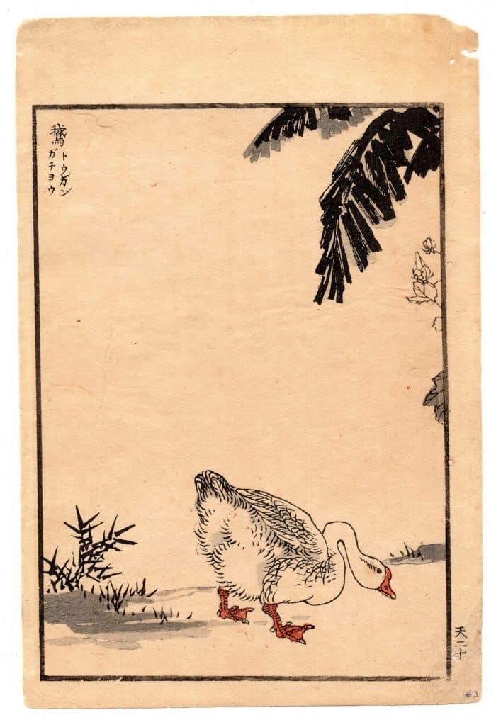 Bairei Kono - A Goose from One Hundred Birds