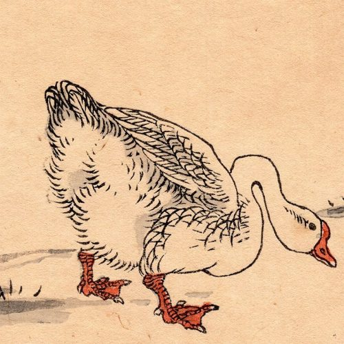 Bairei Kono - A Goose from One Hundred Birds (featured)