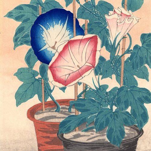 Hiroaki Takahashi (Shotei) - Morning Glories (featured)