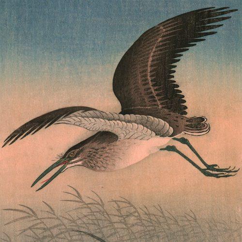 Ohara Koson - Great Egret in Flight (featured)