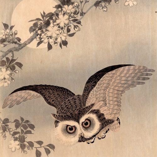Ohara Koson - Owl Moon (featured)