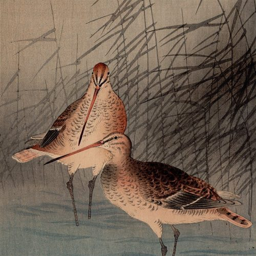Ohara Koson - Reeds and Snipe in a Stream (featured)