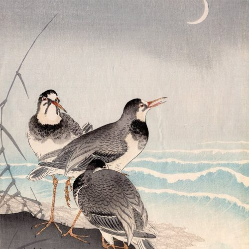 Ohara Koson - Three Plovers and Crescent Moon (featured)