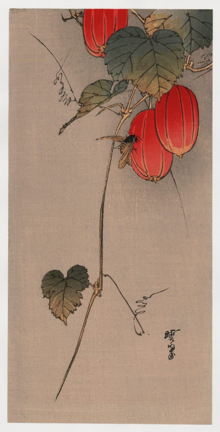 Gyosui Kawanabe - Bee and Red Fruit (Robber Fly on Snake Gourd)