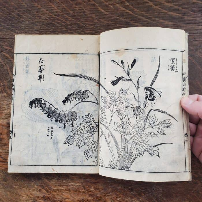Tachibana Yasukuni - Picture-book of Wild Flowers (featured)