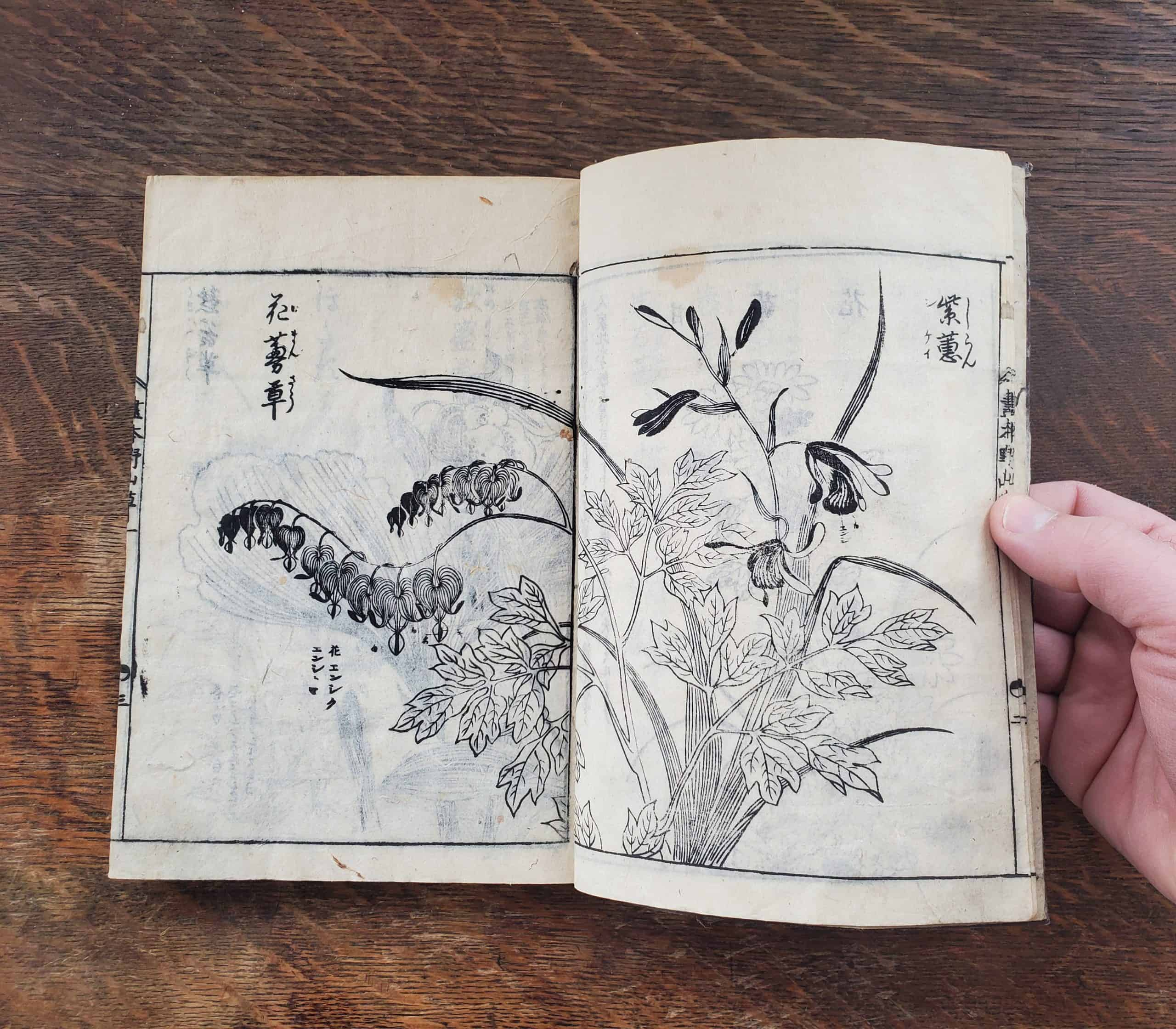 Tachibana Yasukuni - Picture-book of Wild Flowers (flower 1)