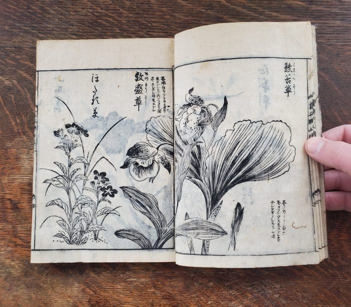 Tachibana Yasukuni - Picture-book of Wild Flowers (flower 2)