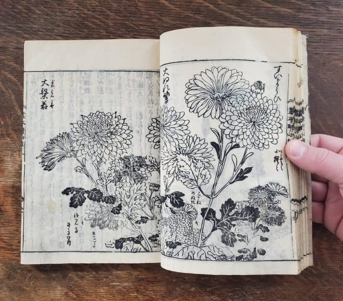 Tachibana Yasukuni - Picture-book of Wild Flowers (flower 3)