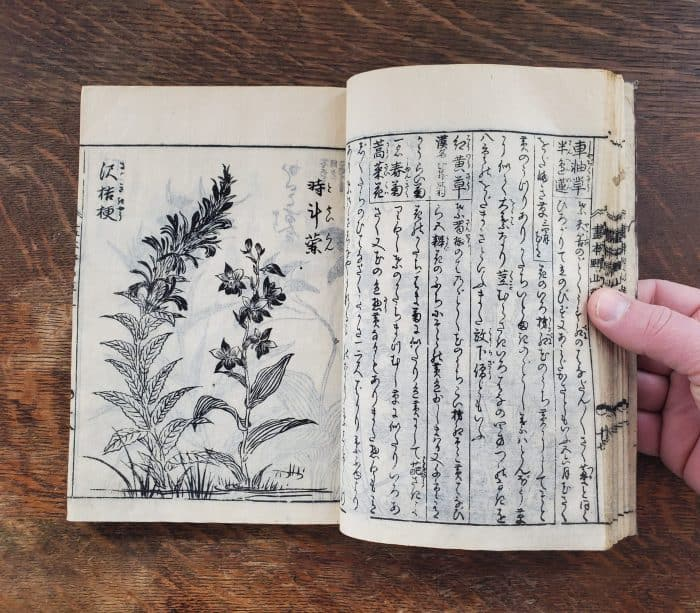 Tachibana Yasukuni - Picture-book of Wild Flowers (flower 4)
