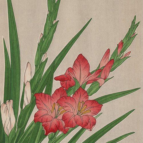 Kawarazaki Shodo - Gladiolus (featured)