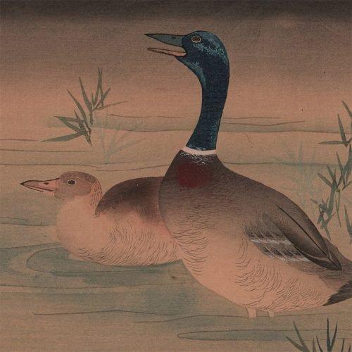 Okuhara Seiko - View of Domesticated Ducks (featured)
