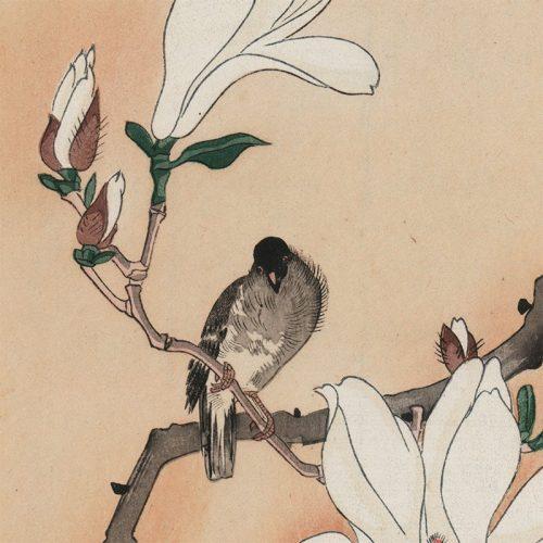 Seitei Watanabe - Bird on Magnolia (featured)