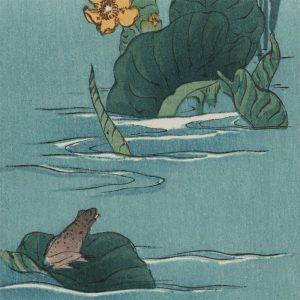 Shoda Koho - Frog on a Leaf (featured)