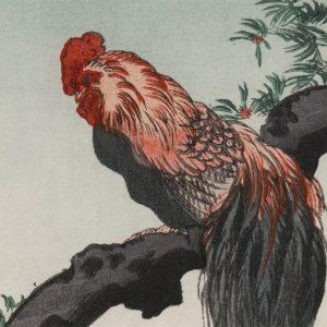 Shoda Koho - Long Tailed Rooster (featured)