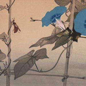 Rakusan Tsuchiya - Morning Glory and Wasp (featured)